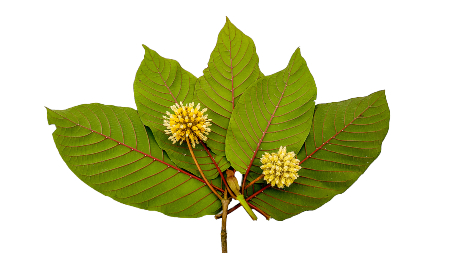 Kratom_About Us